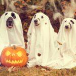 Trick or Treat? The Origin of Halloween Words